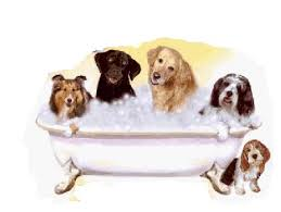 dog grooming2